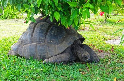 schildkröte 500